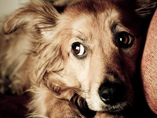Чего боятся собаки?