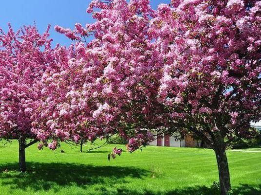 Чим хороша весна?