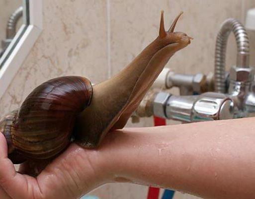 чим годувати равликів в домашніх умовах