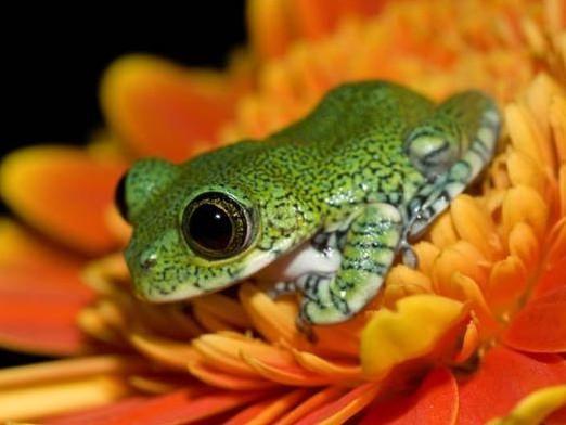 Чем лягушка отличается от жабы?