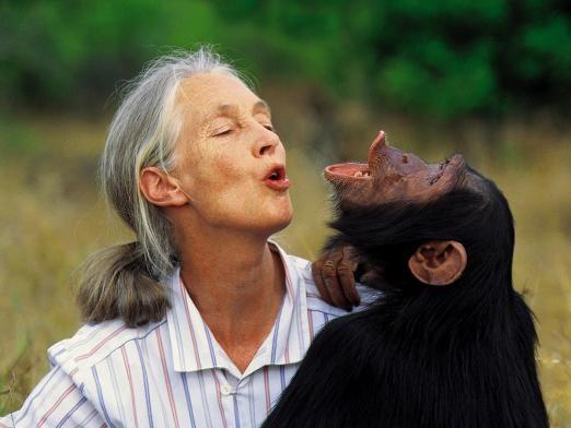 Чем отличается человек от животного?