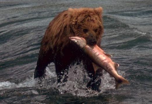 Чем питается медведь?