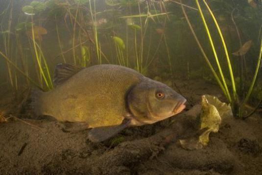 Чим харчуються риби?