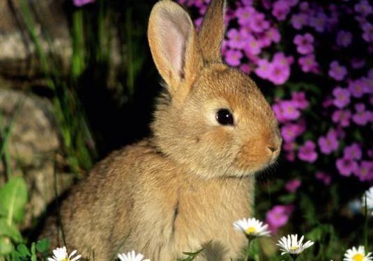 Чем питаются зайцы?