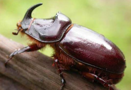 Чем питаются жуки?