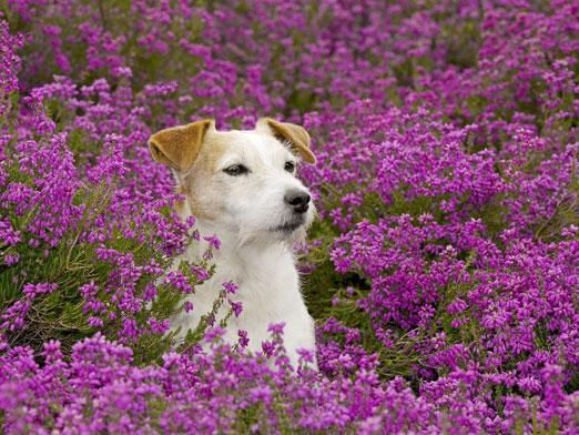 Чем растения отличаются от животных?