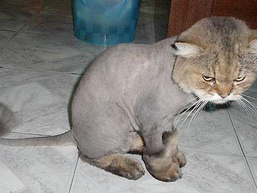 Чем стричь кошку?