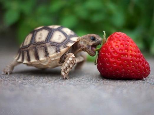 Что едят черепахи?