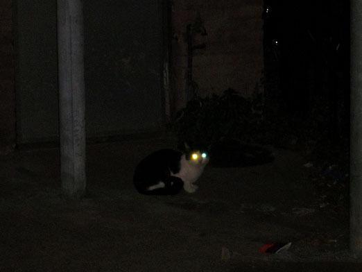 Что коты делают ночью?