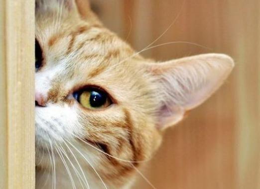 Что любят коты?