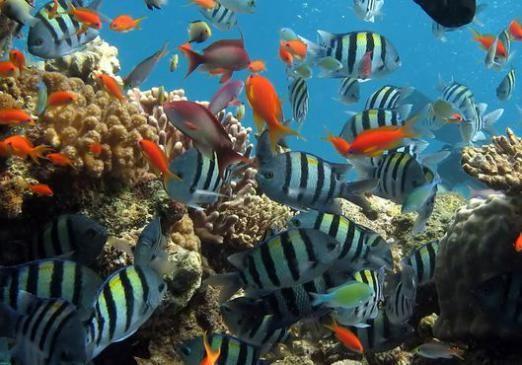 Что на дне океана?