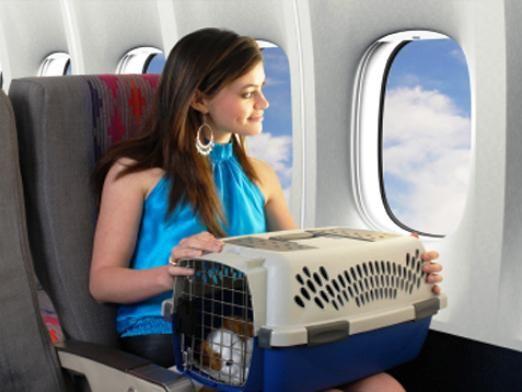 Что нельзя брать в самолет?