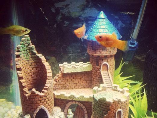 Что нужно для аквариума?