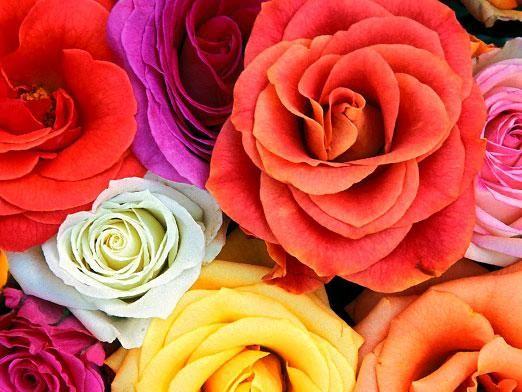 Что означает цвет цветов?