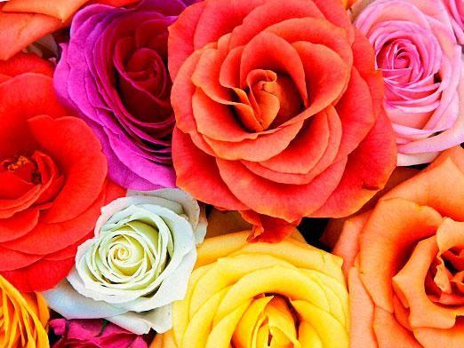 Что означает цветок?
