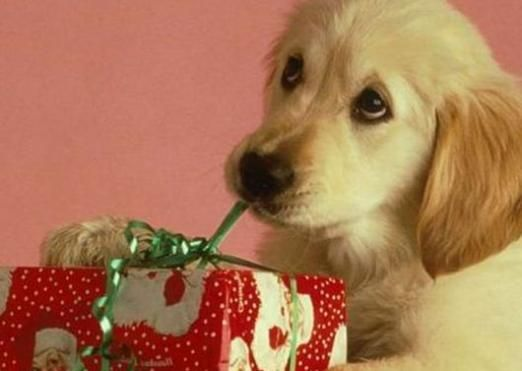 Что подарить собаке?