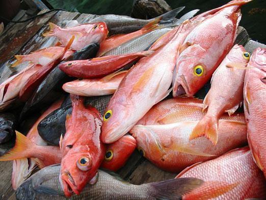 Что приготовить из рыбы?
