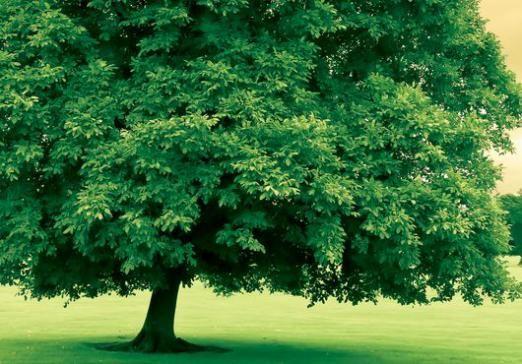 Что такое дерево?