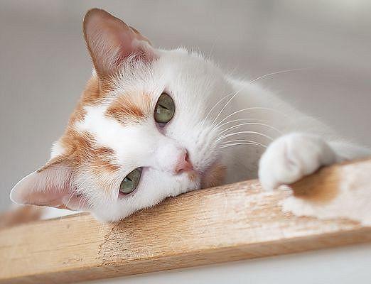Что такое кошка?