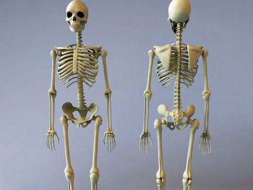 Для чего нужны кости?