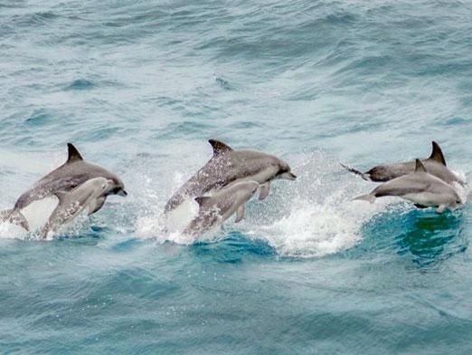Едят ли дельфинов?