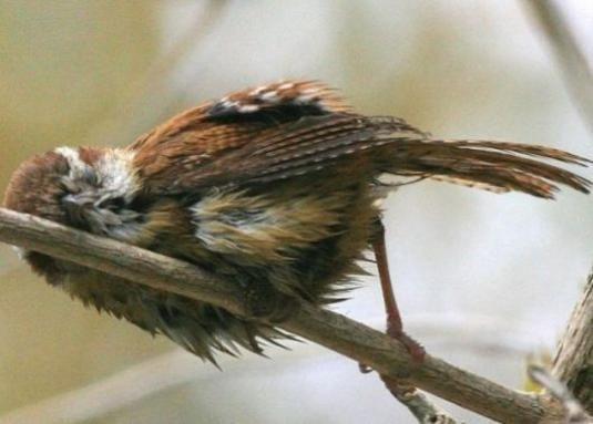 Где спят птицы?