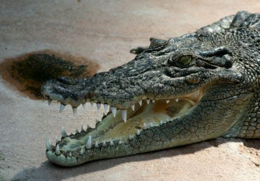 Где живут крокодилы?