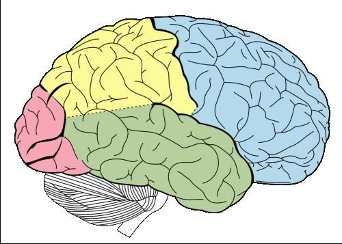 грані можливого людський мозок