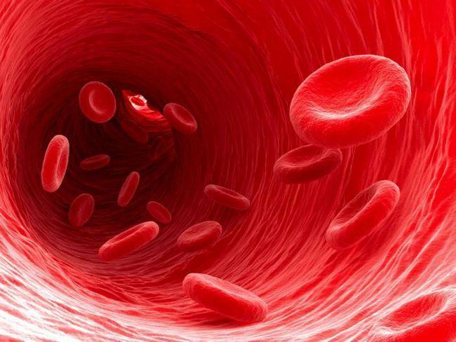 еритроцити в крові норма