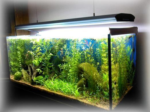 До чого сниться акваріум?