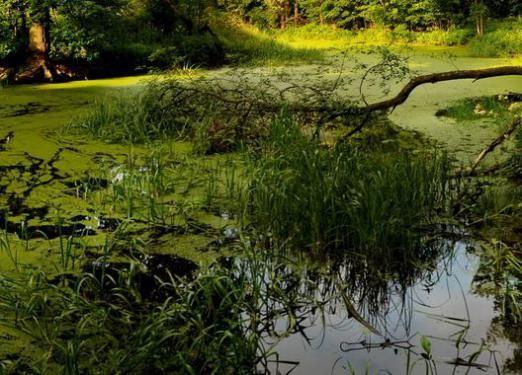 До чого сниться болото?