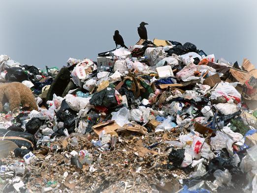 К чему снится мусор?