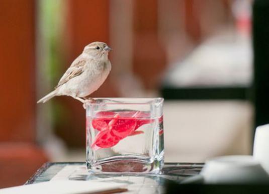 К чему залетает птица?