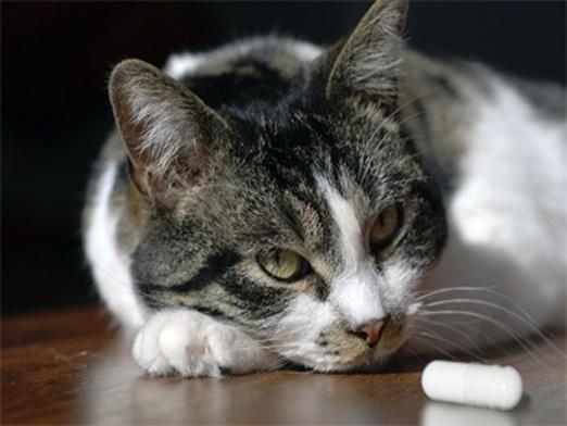 Как дать таблетку кошке?