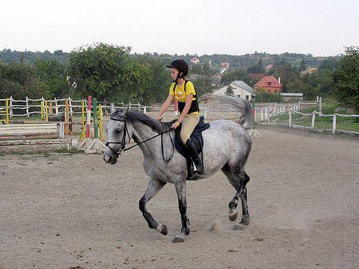 Как ездить на лошади?