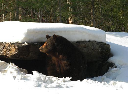 Как готовятся звери к зиме?