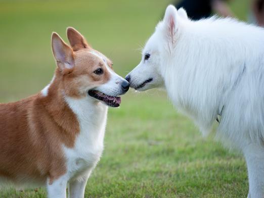 Как говорят собаки?