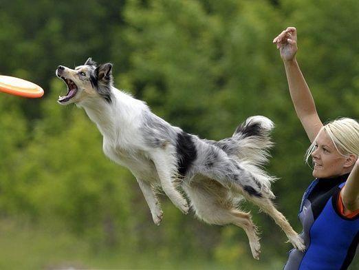 Как играть с собакой?