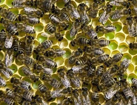 Как избавиться от пчел?