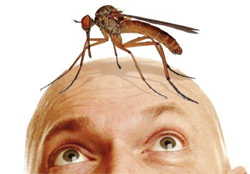 Кого-кусає-комар