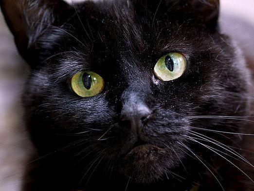 Как лечат кошки?