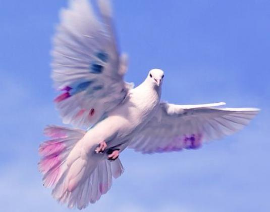 Как летает птица?