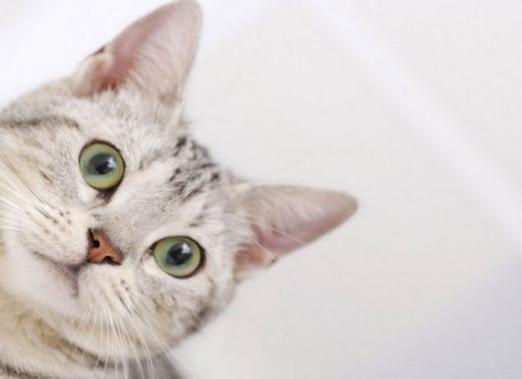Как можно назвать кота?
