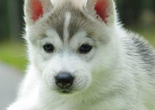 Как можно назвать собаку-девочку?