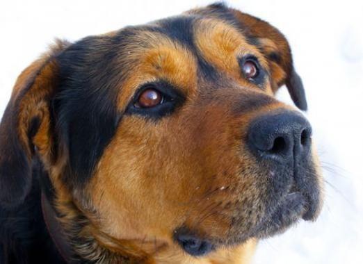 Как можно назвать собаку?