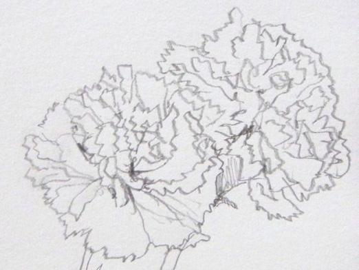 Как нарисовать гвоздику?