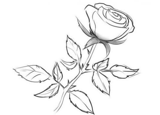 Як намалювати троянду олівцем?