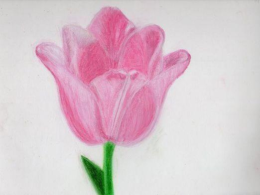 Как нарисовать тюльпан?