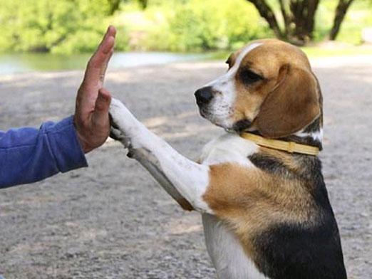 Как научить собаку командам?