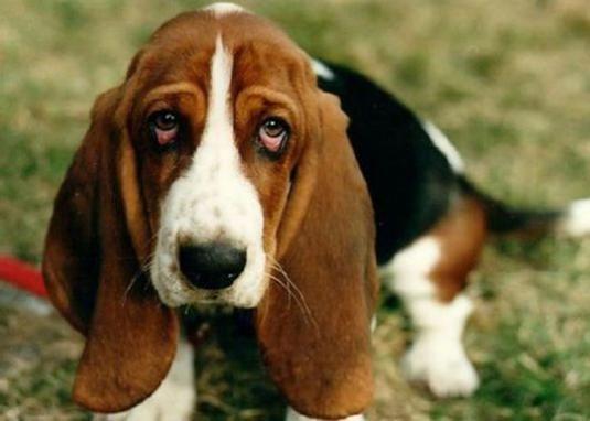Как научить собаку команде голос?
